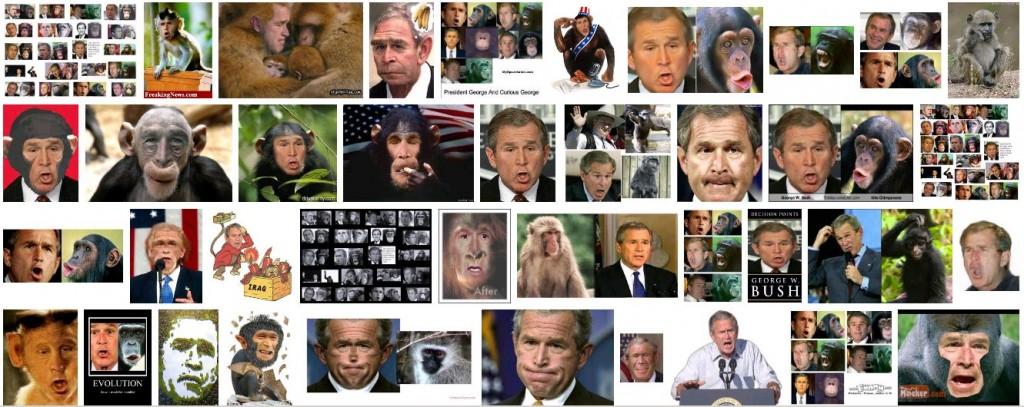 Bush Monkey Google Images