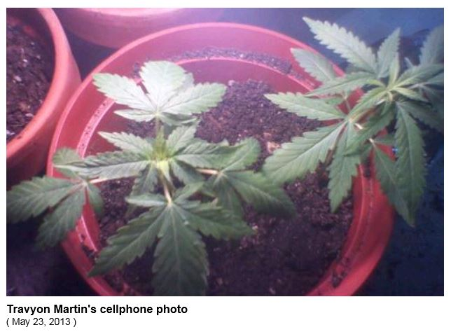 Trayvon Martin Photo Pot Plants
