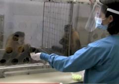 Upworthy AFL CIO Monkey Video