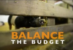 Joni Ernst Squeal Balance Budget