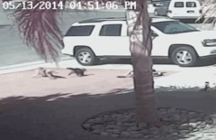 Cat rescues boy from dog