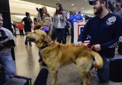 marine-military-dog-adoption