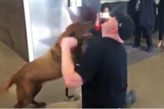 veteran-reunites-military-dog