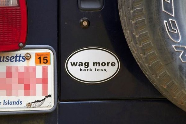 Bumper Sticker - Chappaquidick - Wag More Bark Less