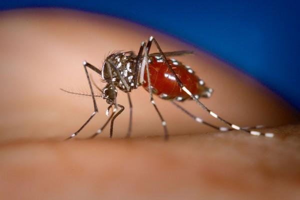 LI #26 Mosquito