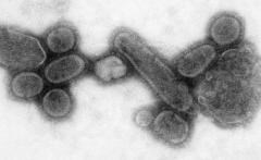 LI #40 flu virus