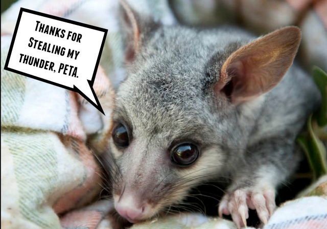 Peta Ruins New Year Celebration For Small Town In North