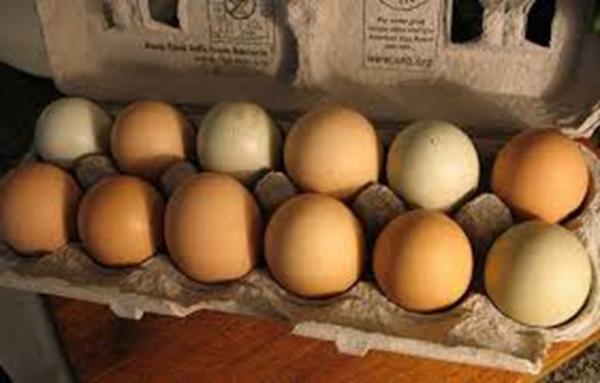 LI #26 eggs