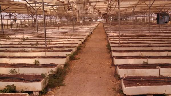Negev Bedouin Flower Greenhouse