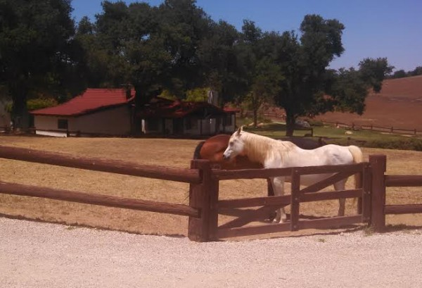 Reagan Ranch Front of House Horses