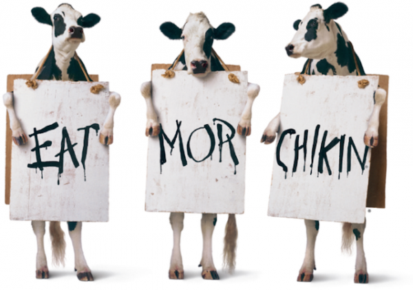 chick fil a cows