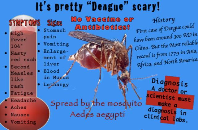 Mosquito Virus Big Island