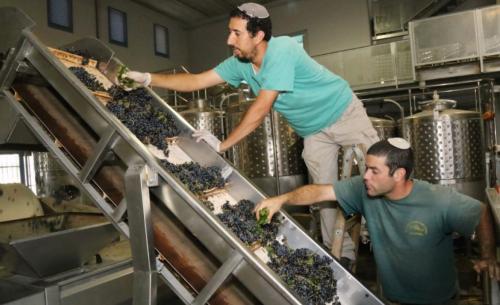 Jewish Israeli Winemakers | Gush Etzion | credit: Times of Israel