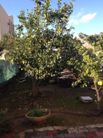 Mirit Hadar garden Israel